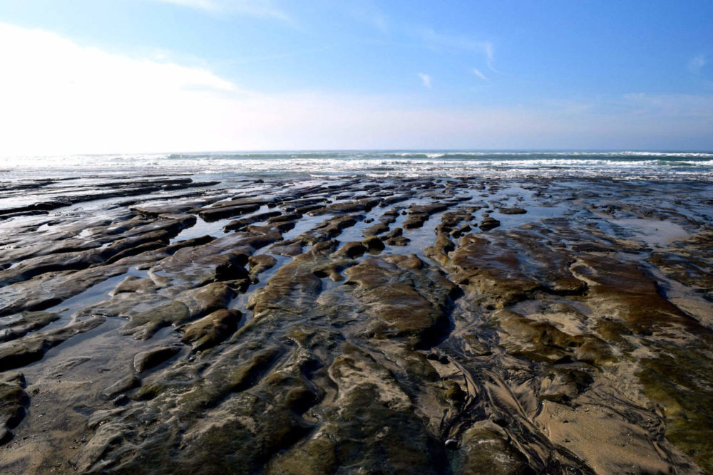 Torrey Pines State Natural Reserve The Adventures Of