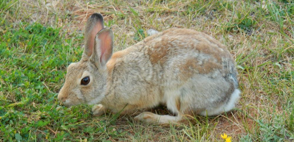 There were some rabbits at the site, Trail is badly allergic to rabbits.