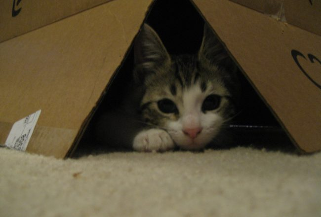 Its Kia the Kitten in a box