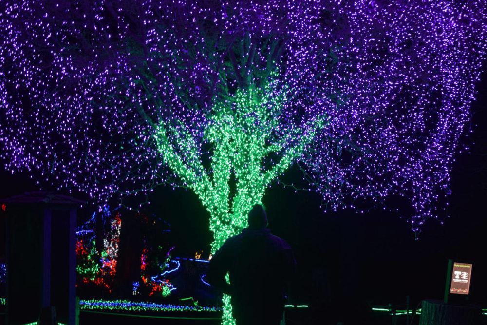 Tree of Lights