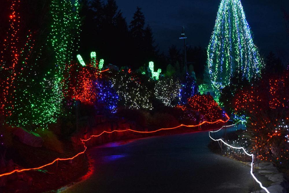 Zoo Lights Path
