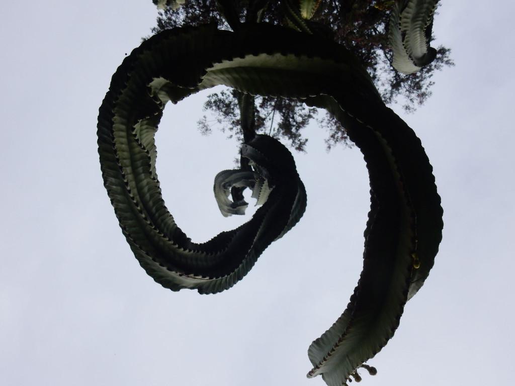 Giant Cactus Tree