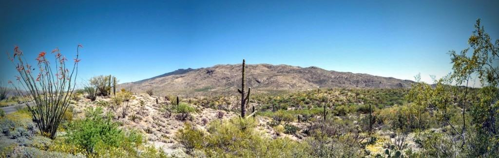 Cactus Forest Overlook