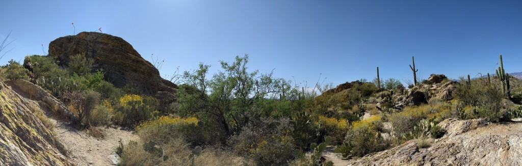 This is my view while extracted Prickly Pear Thorns from my flesh