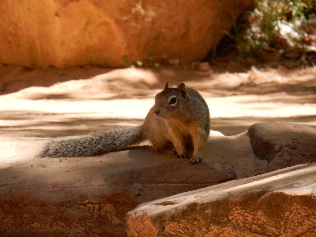 Squirrels beg like cats