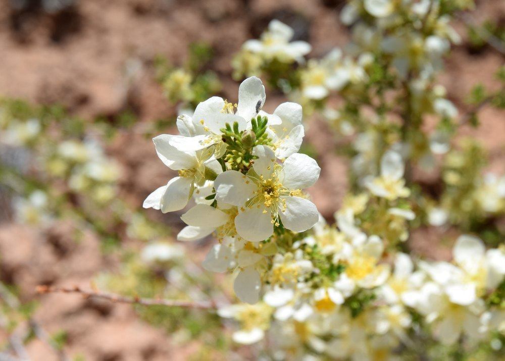 Tread Carefully! Stick to washes and slickrock. Protect pretty White flowers