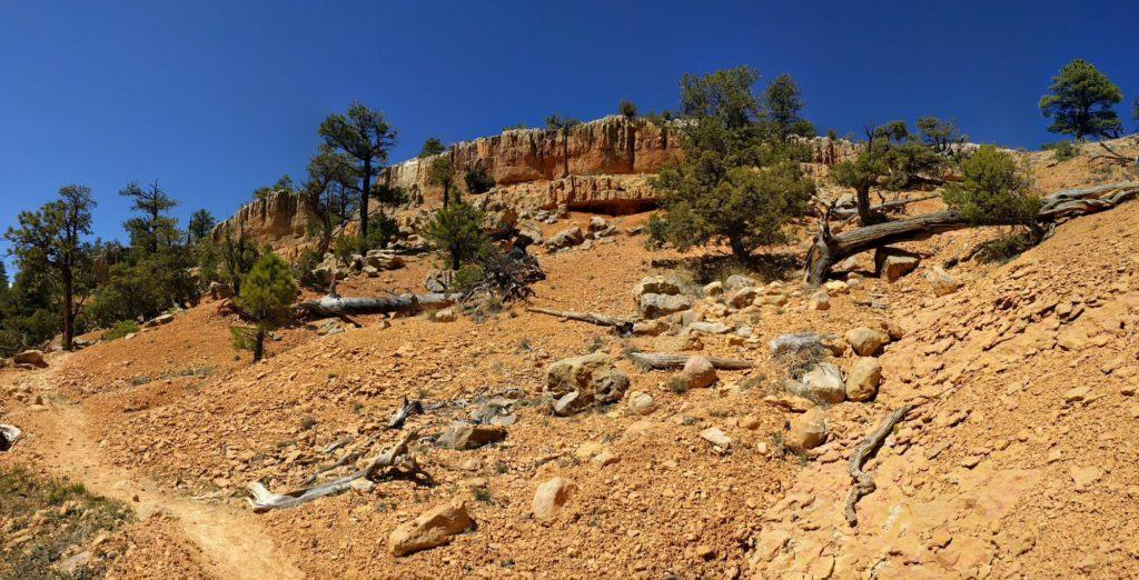 Up along Rich Trail