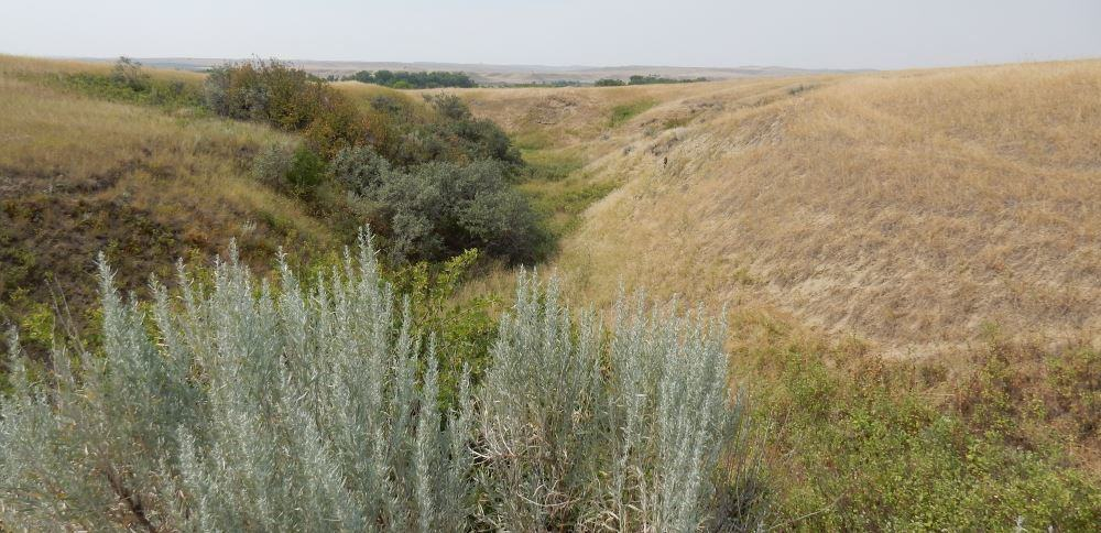 This is the Little Bighorn river in high summer, just a dry ravine running through the battlefield.