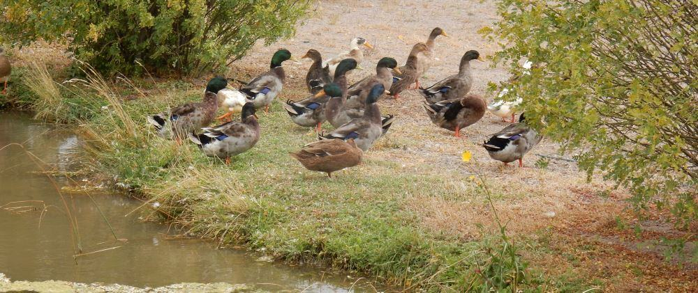 These ducks appeared to be long term residence. There are also tons of frogs, rabbits, and fish to look at.