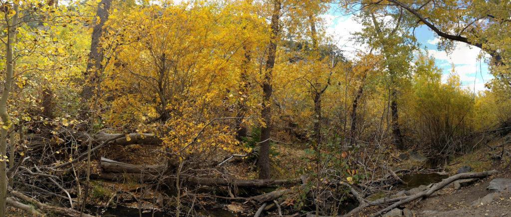 Mosca Creek Panorama