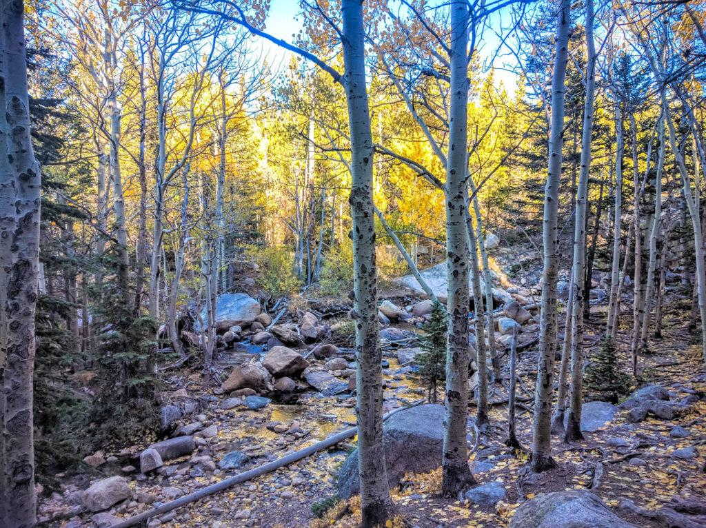 Aspen Grove Near Glacier Creek
