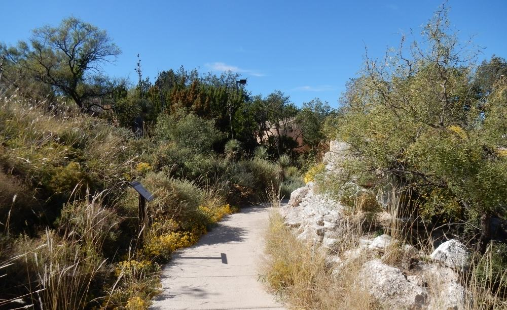 The gardens were filled with a huge variety of desert plants. This was part of the riparian area.