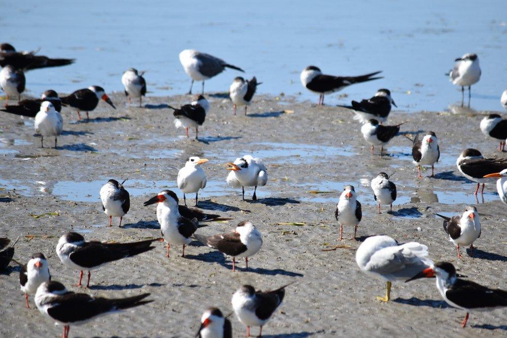 So many shorebirds!