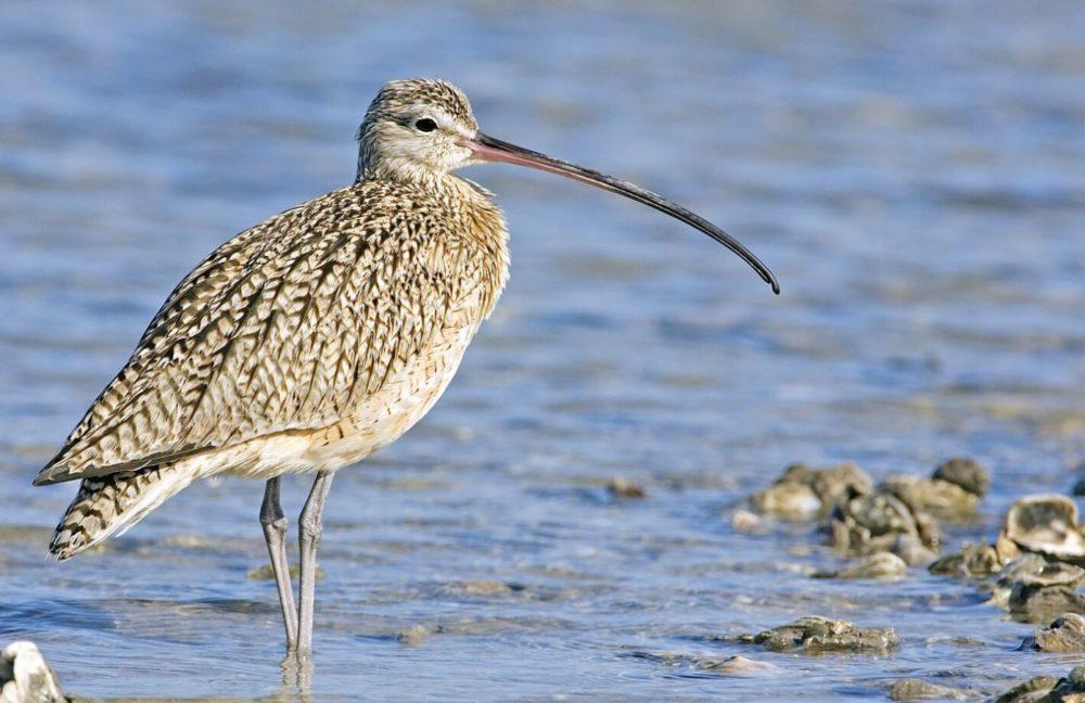 Plenty of Shorebirds