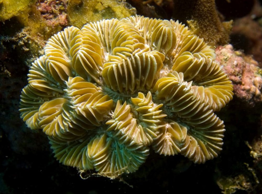 Find gorgeous corals at Little Africa Reef